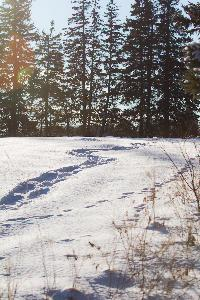 A snow shoers path