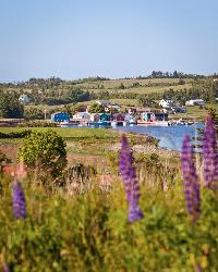 French River is a gorgeous place on Prince Edward Island that include a wharf. Here you see the wharf with fishing boats. In the foreground there are numerous lupins.